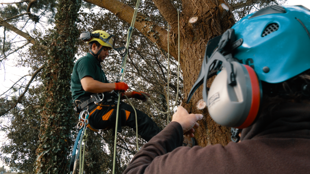 Tree surgeon training cornwall